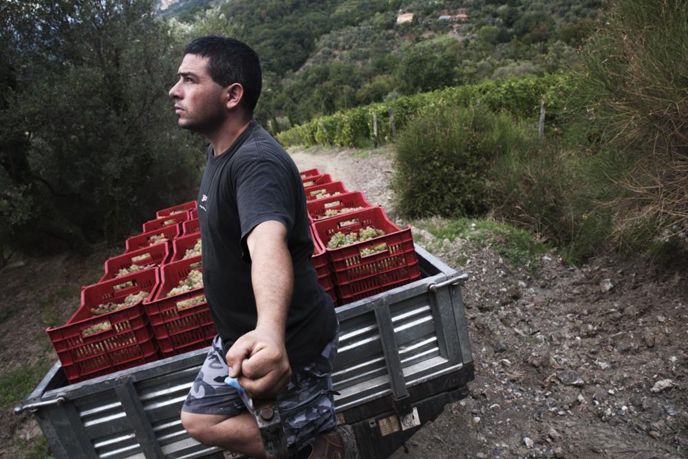 trasporto uva