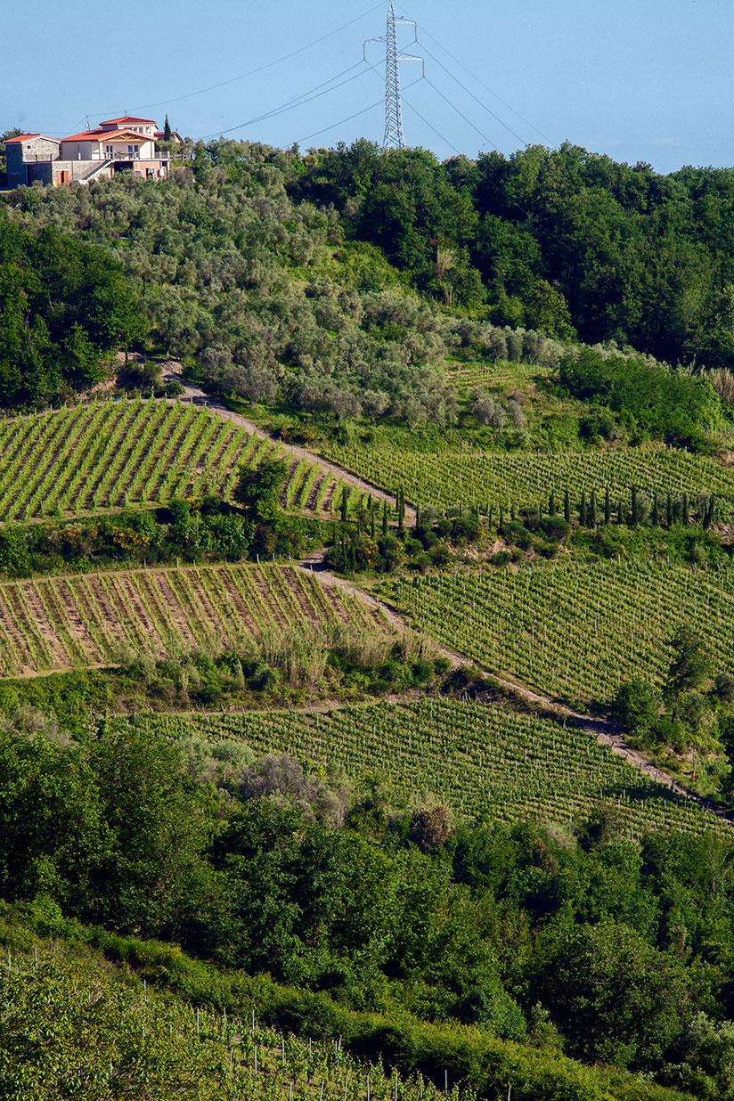 panorama_azienda_agricola_pascale_francesca