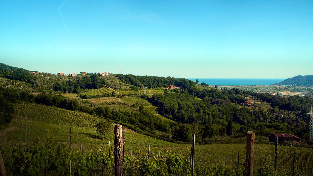 panorama_vigna_azienda_agricola_pascale_francesca